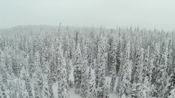 Thumbnail for Winter Landscape With Snow Covered Pine Trees