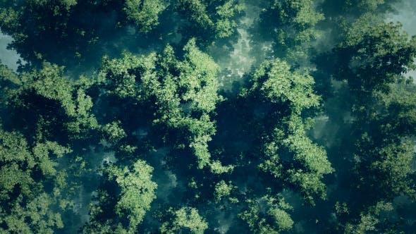 Thumbnail for Morning Fog In Forest
