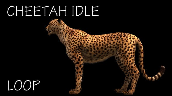 Thumbnail for Cheetah Idle