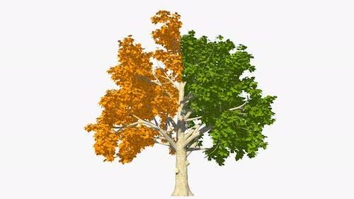 Halb Gelb Und Halb Grün Baum
