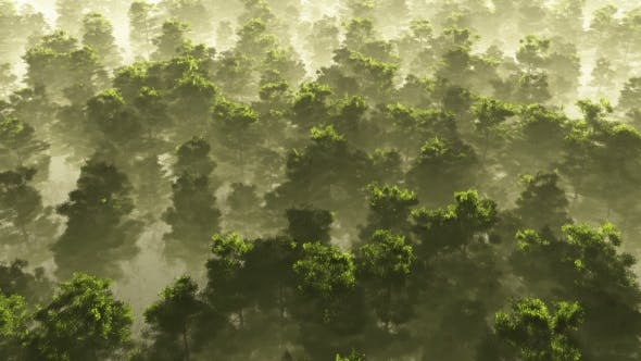Morning Fog In Dense Tropical Eainforest