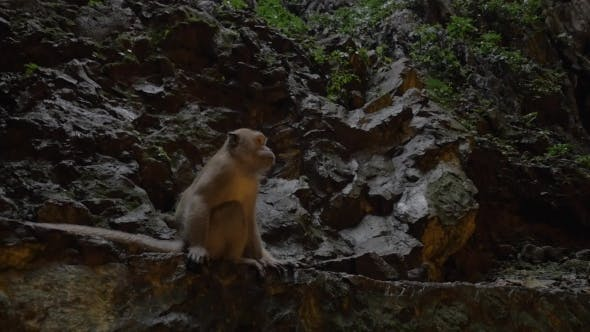 Thumbnail for Monkey In Batu Caves, Malaysia