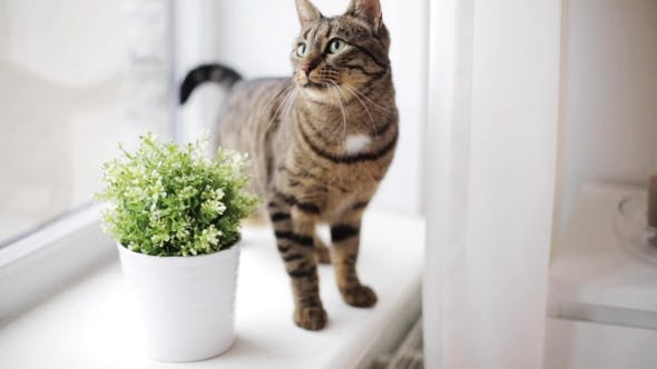Thumbnail for Cat On Window Sill At Home 19