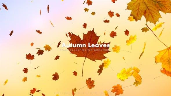 Thumbnail for Autumn Leaves 3