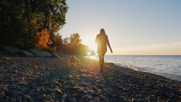 Cover Image for Silhouette Of a Young Woman. She Walks With a Dog Near a Lake Or The Sea At Sunset
