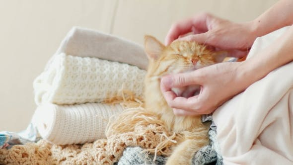 Thumbnail for Cute Ginger Cat Sleeps on a Pile of Knitted Clothes