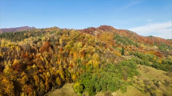 Cover Image for Autumn Colored Forest