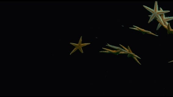 Thumbnail for Starfish in the Water in