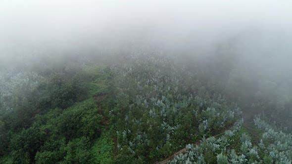 Brume au-dessus de la forêt