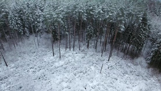 Cover Image for Aerial View of Snowy Forest at Winter