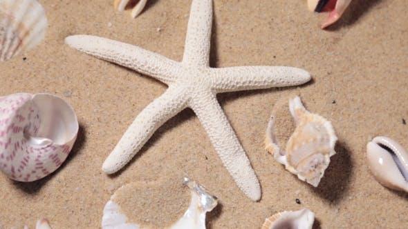 Thumbnail for Rotating Tropical Starfish and Seashell Collection