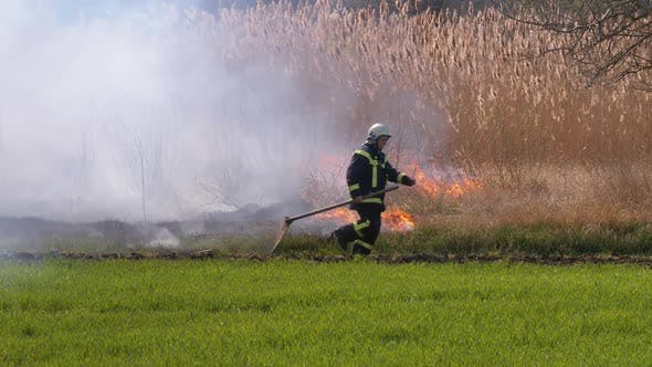 Thumbnail for Fireman with a Shovel Runs Through a Burning Dry Bush and Reed Near the Forest.