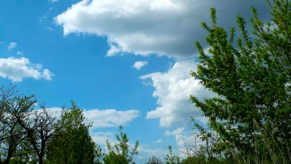 Clip of White Fluffy Clouds Over Blue Sky. Beautiful Cloudscape Before Storm. Tree Branches Sway