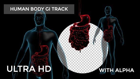 Thumbnail for Human Body With GI Track Rotation