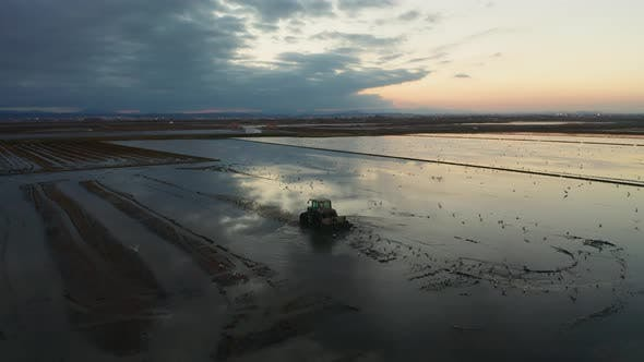 Thumbnail for Aerial View of Rice Fields, Flocks of Birds and Agricultural Machinery During Sunset on Lake