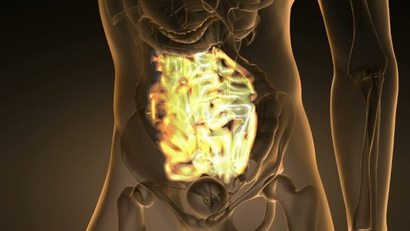 Thumbnail for Anatomy Scan of Human Small Intestine