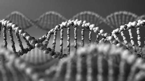 Monochrome DNA Molecules