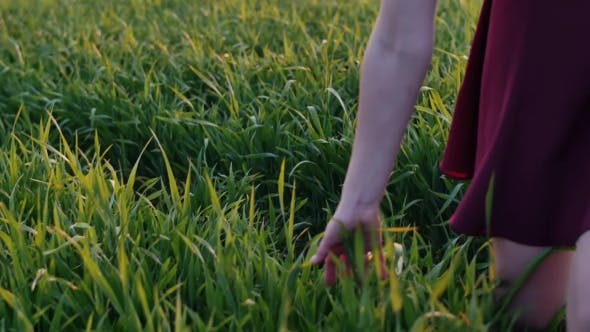 Thumbnail for Legs of Woman Walking in Field Touching Long Grass with Her Hand. Young Girl in Dark-red Dress