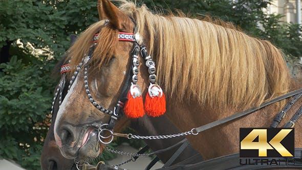 Thumbnail for Horses with Red Harness