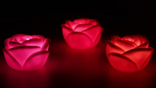 Thumbnail for Changing Color Roses Lights