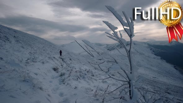 Thumbnail for Frozen Tree in the Mountains. Out of Focus Girl