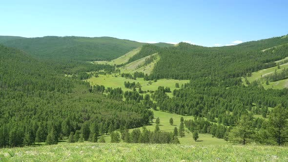 Green Meadows in The Sparsely Wooded Between Forest Covered Valley