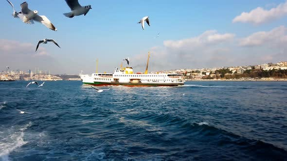 Cover Image for Seagulls Over Bosphorus With Ferry Passing By