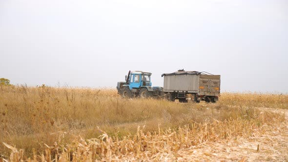 Thumbnail for Big Cargo Tractor Transporting Gathered Crop at Field