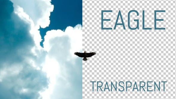 Thumbnail for Eagle - From Below