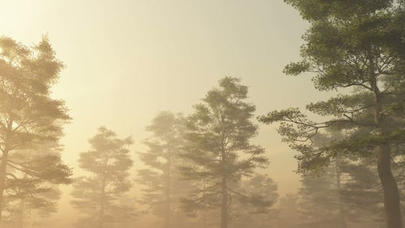 Thumbnail for Morning Forest in Fog