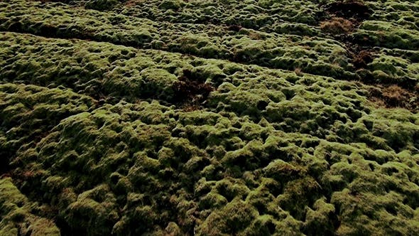 Thumbnail for Iceland Lava Field Covered With Moss