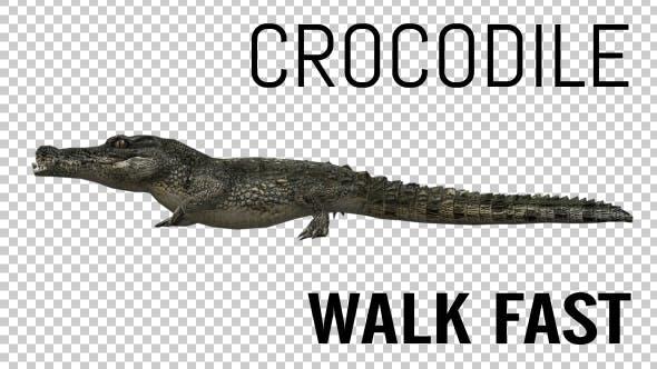 Thumbnail for Crocodile - Alligator Walk Fast