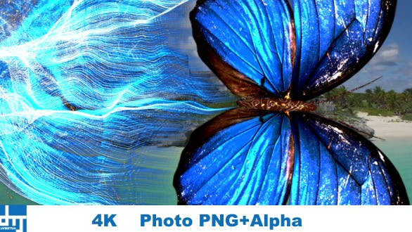 Blue Butterfly  Particle Trailing Flying Transtion V1