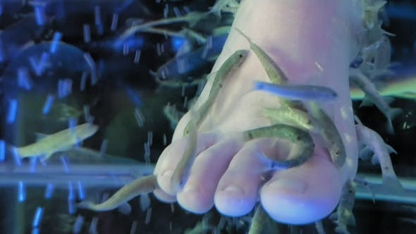 Thumbnail for A Lady Is in a Spa Getting a Fish Pedicure