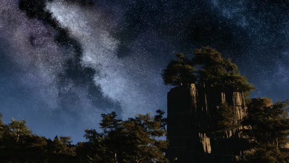 Thumbnail for of Stars and Silhouetted Trees