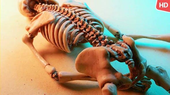 Thumbnail for Human Skeleton 0181