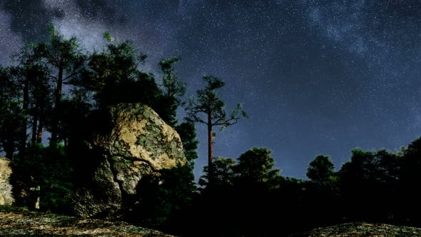 Thumbnail for of Stars and Silhouetted Pine Trees