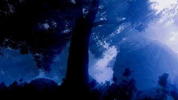 Thumbnail for Dark Forest Landscape at Night