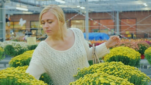 Thumbnail for Young Caucasian Woman Chooses Flowers for Landscaping in the Nursery