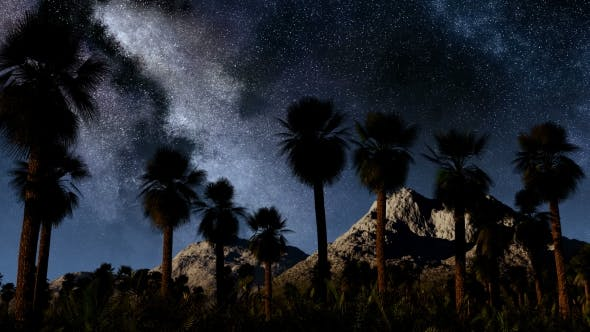 Thumbnail for of Stars and Silhouetted Palm Trees