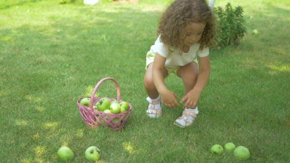 Thumbnail for Curly Girl Picking Apples in Garden