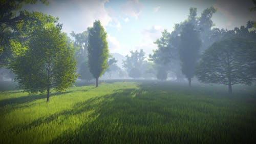 Matte Painting Forest