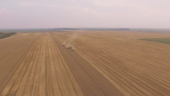 Thumbnail for Combines Harvest Leaving One By One