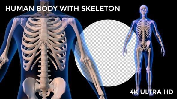 Human Body With Skeleton Rotation