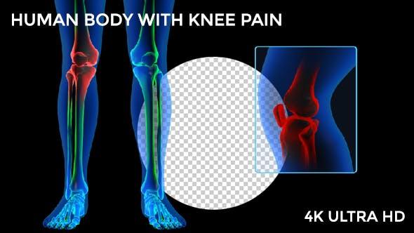 Human Body - Knee Pain