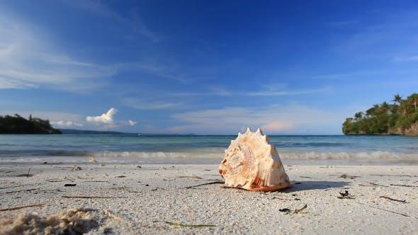 Seashell on Caribbean Sandy Beach