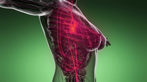 Human Body with Glow Blood Vessels