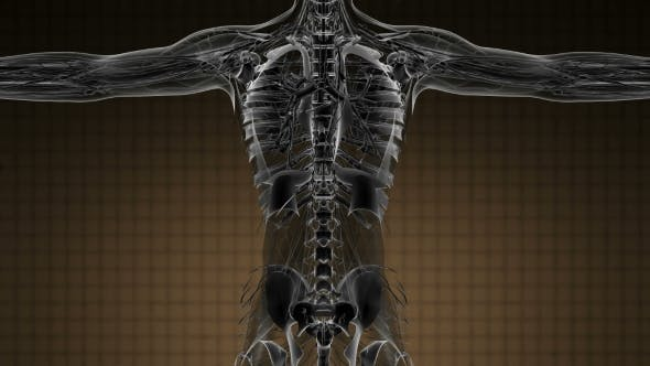 Thumbnail for Anatomy Tomography Scan of Human Body