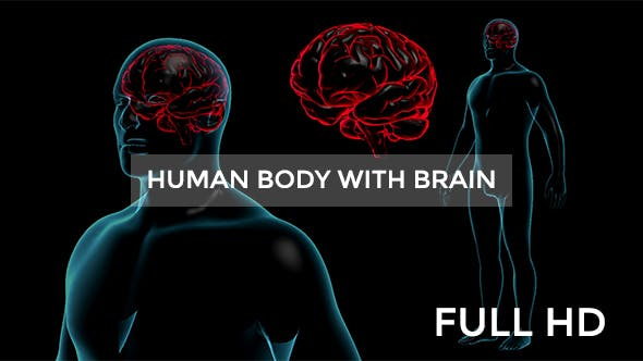 Thumbnail for Transparent Human Body with Brain Full HD