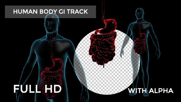 Thumbnail for Human Body With GI Track Rotation Full HD